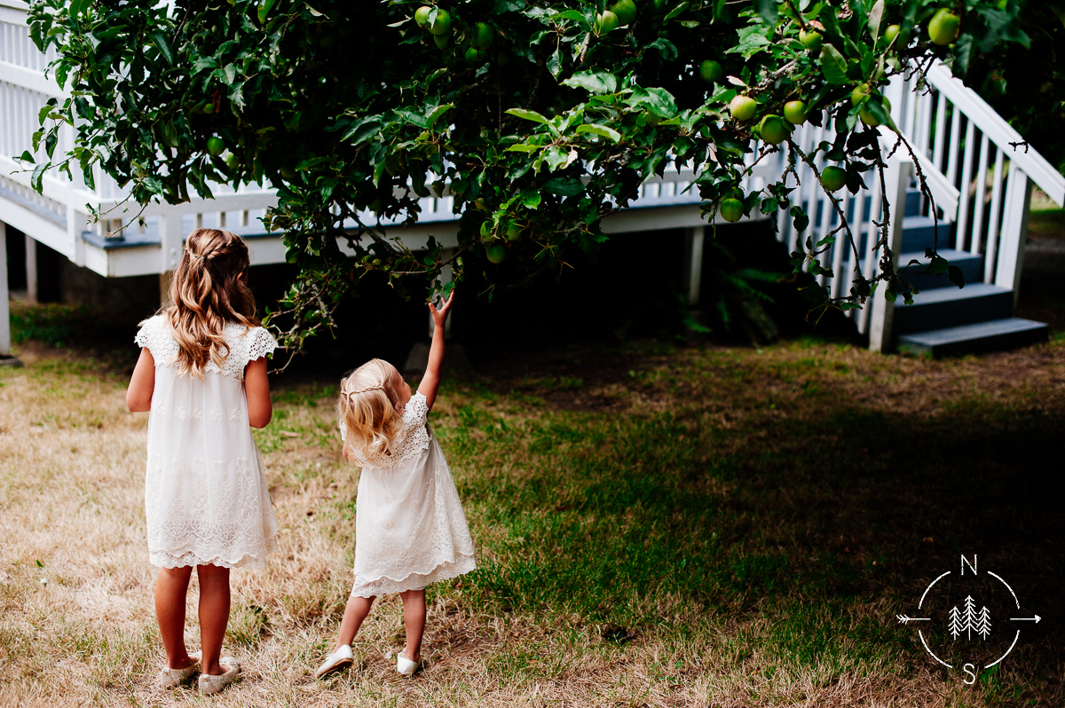 Two little flower girls take a break from the wedding to pick fruit off the orchard trees on Whidbey Island.