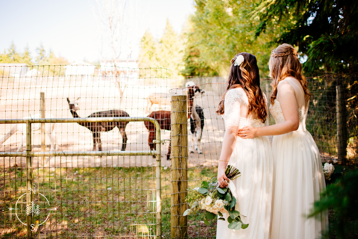 Same sex couple, two brides, looking at alpacas on their wedding day.