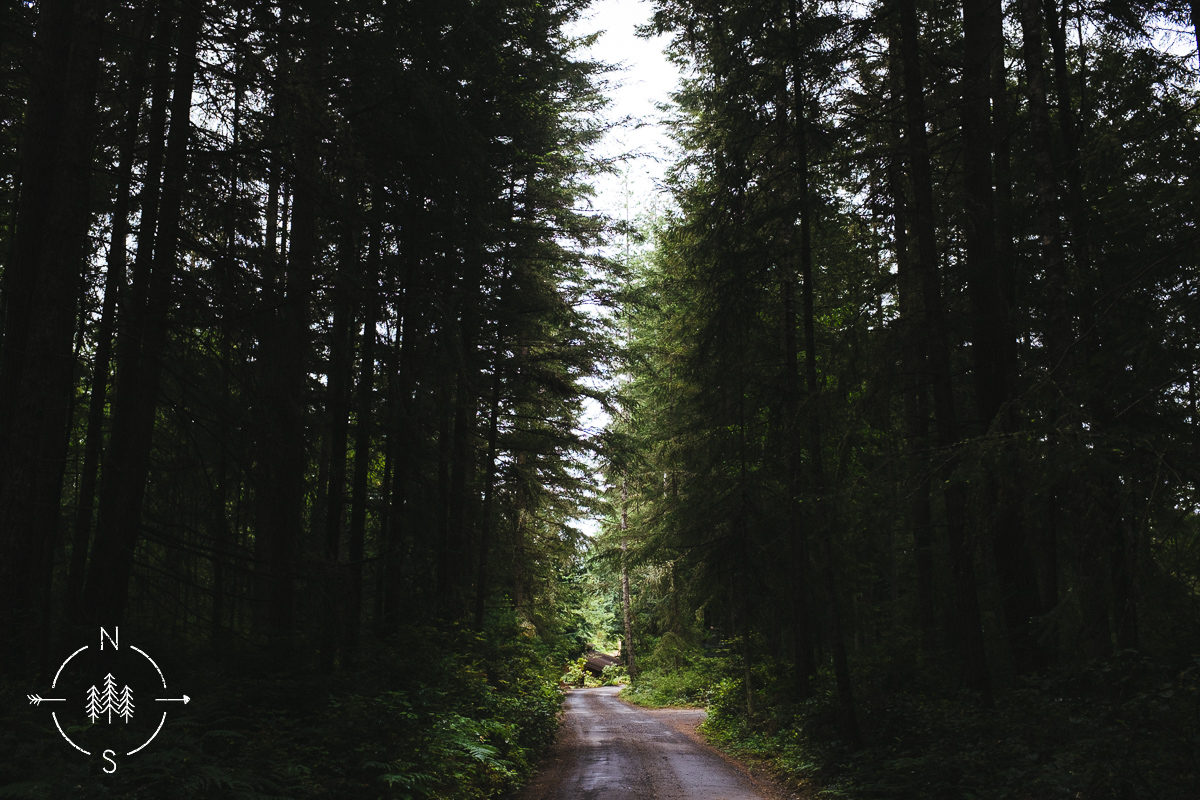 Wooded pathway of evergreen trees lead to a wedding venue in Whidbey Island Washington
